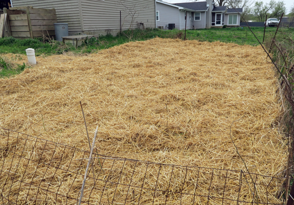 asparagus beds after mulching