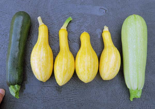 summer squashes