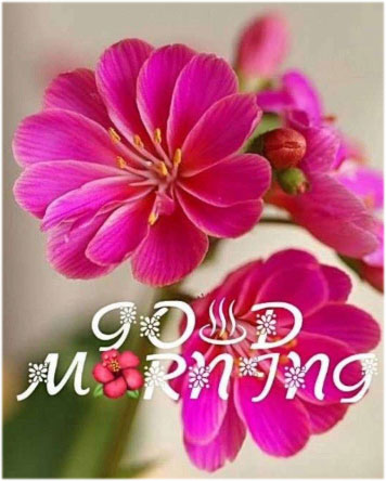 morning-image-with-flowers
