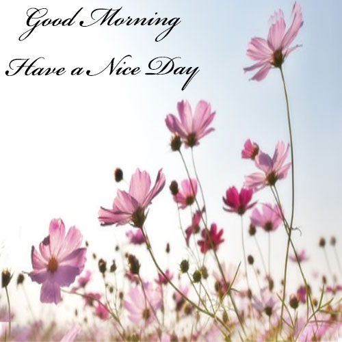 Good morning pictures for whatsapp in hindi