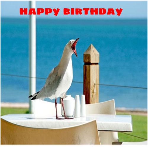 Funny happy birthday wallpaper free hd download