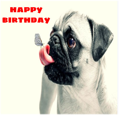 Funny happy birthday free images hd download