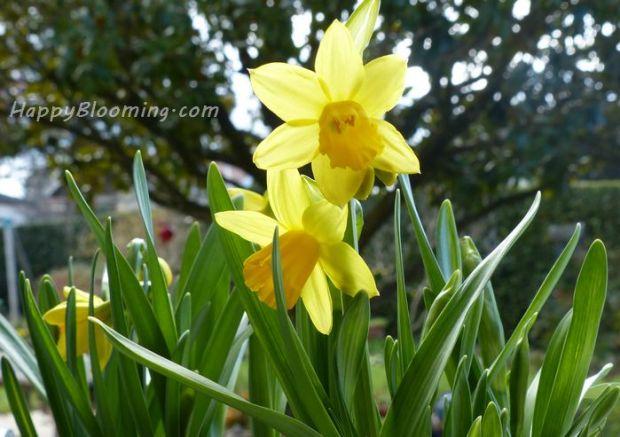 compositions florales printemps recyclé jonquille narcisse diy maison jardin