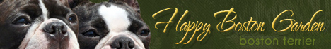 Chovatelska Stanice boston terrier