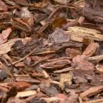 bark-mulch-958416_1920