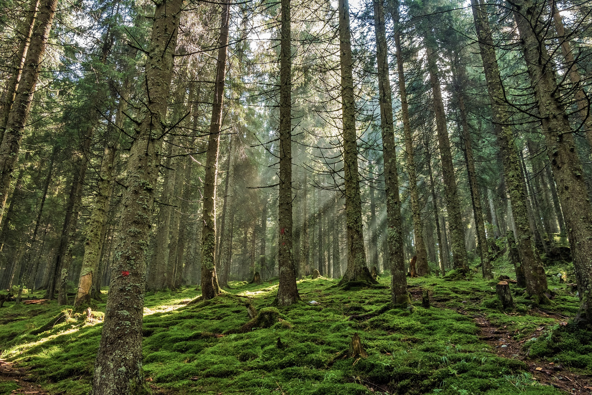 forest-967625_1920