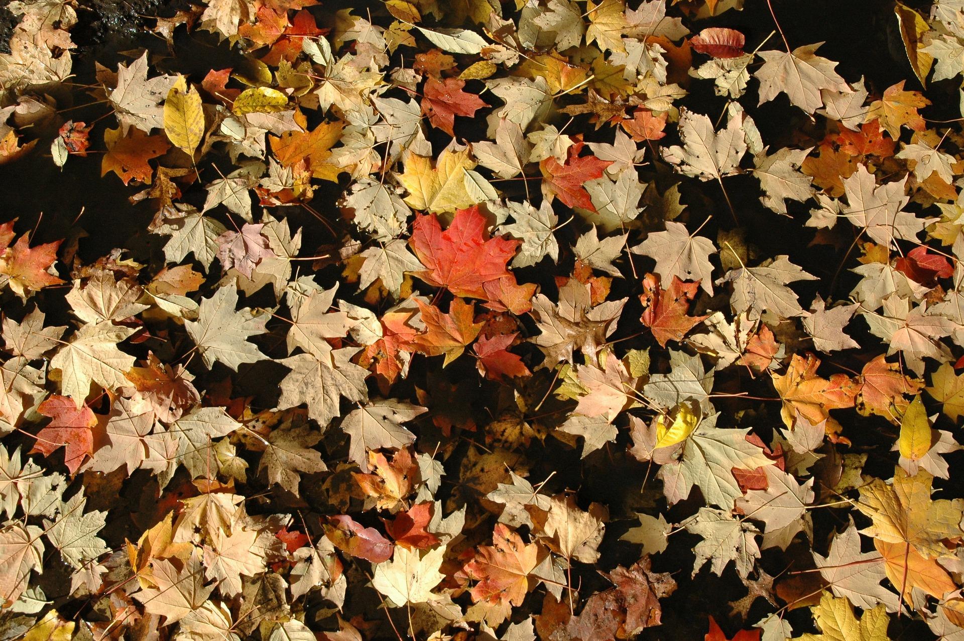 leaves-263943_1920