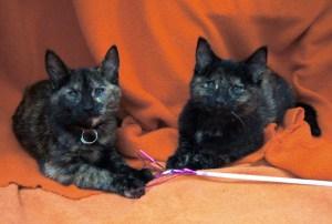 Christina & Louisa @ Happy Cats