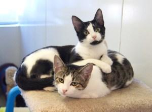 Jerry & Ben @ Happy Cats