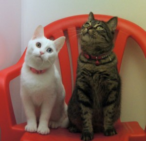 Zuma & Nala @ Happy Cats