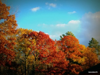 The bright colors of fall contrast brilliantly against a blue sky.