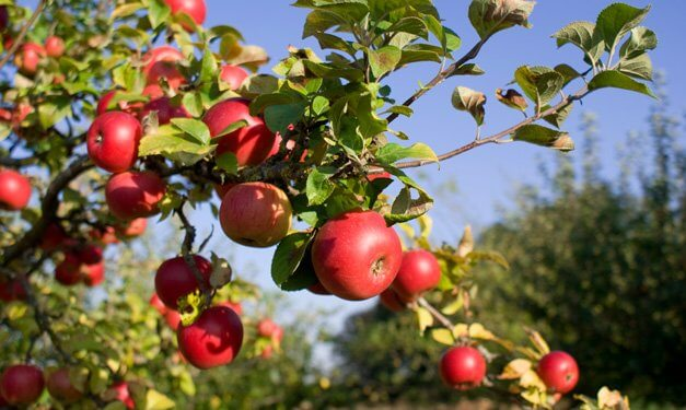 Apple Day 2017 - October 21