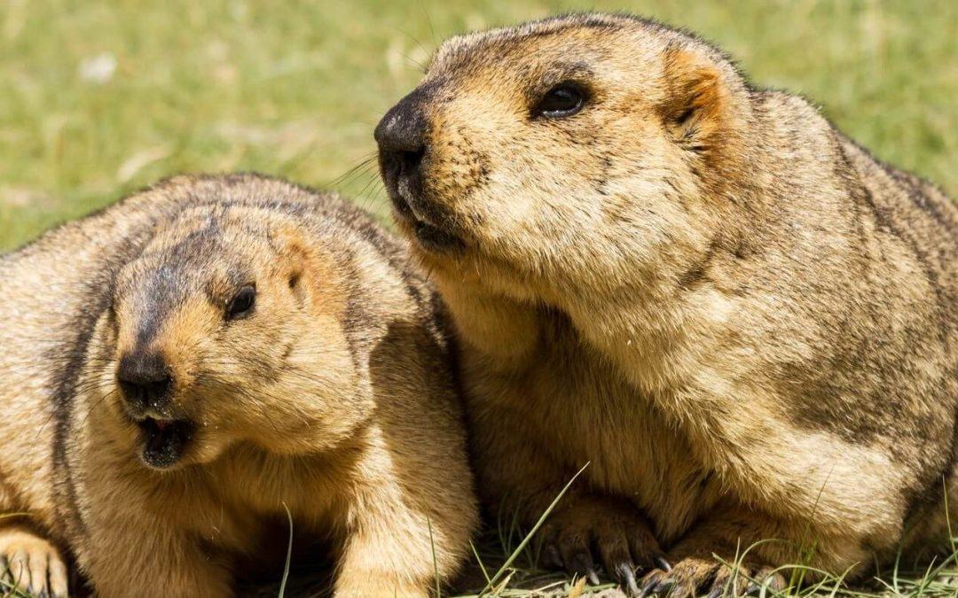 Marmot Day – February 2, 2021