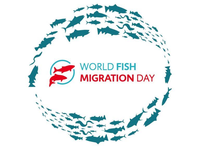 World Fish Migration Day