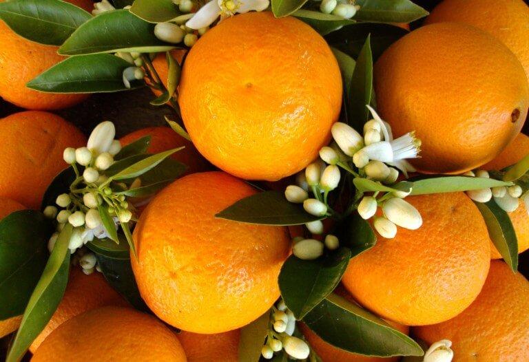 National Orange Blossom Day