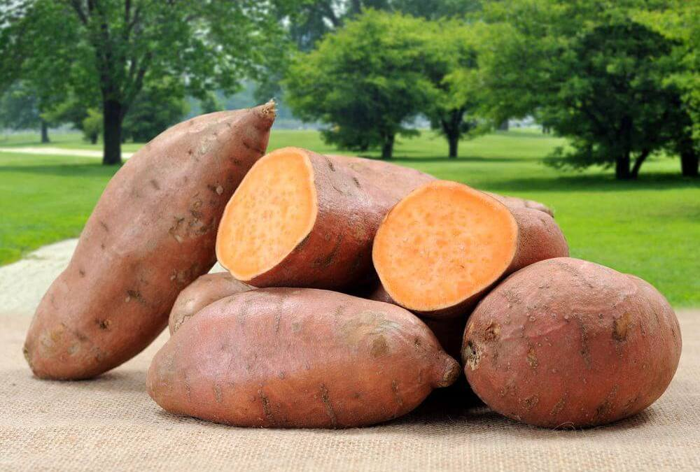 National Cook a Sweet Potato Day – February 22, 2021