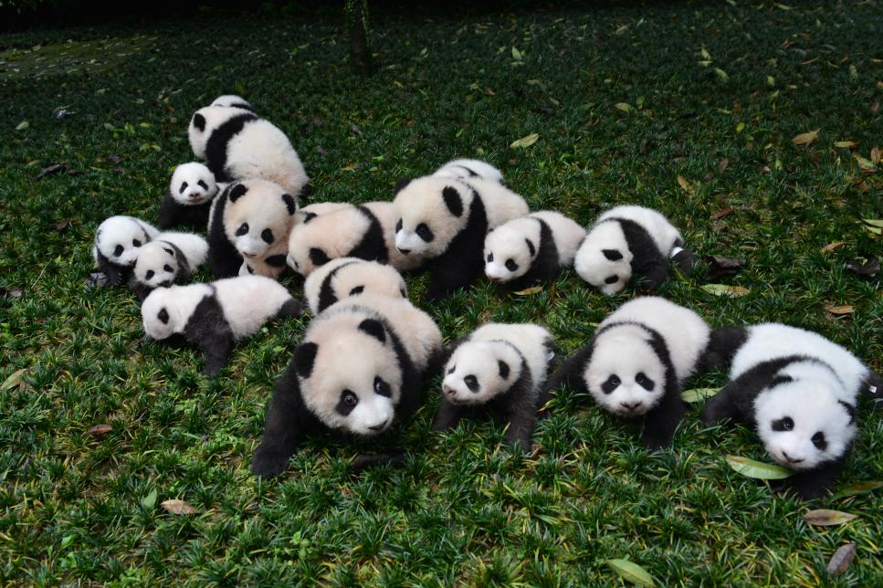 National Panda Day – March 16, 2021