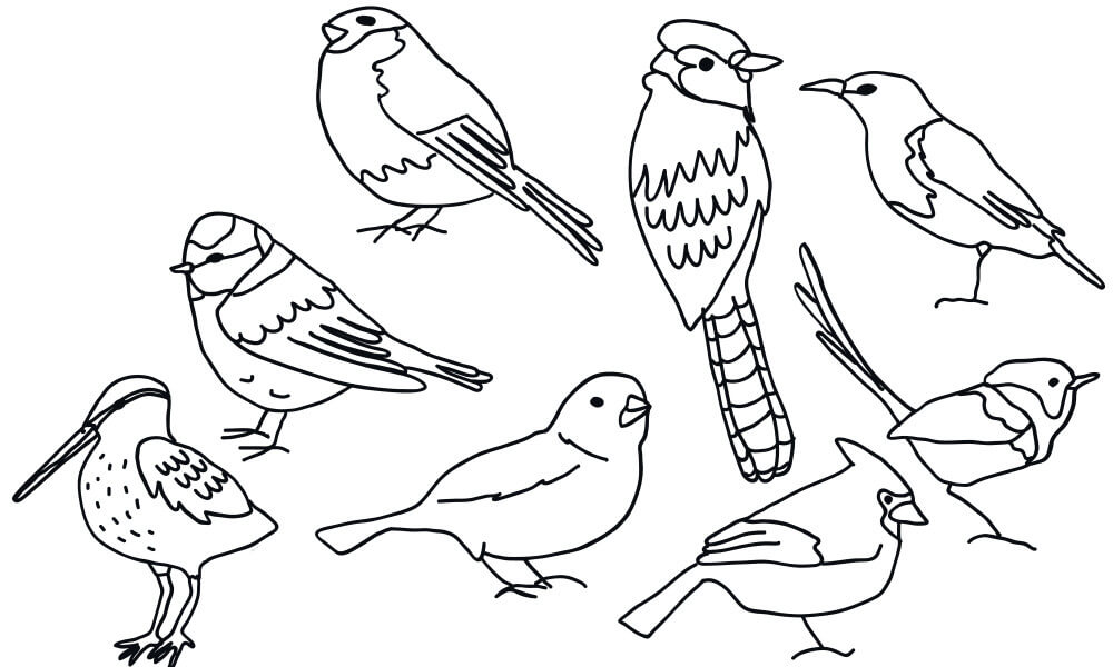 Draw a Picture of a Bird Day – April 8, 2021