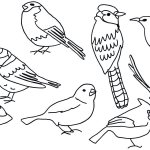 Draw a Picture of a Bird Day