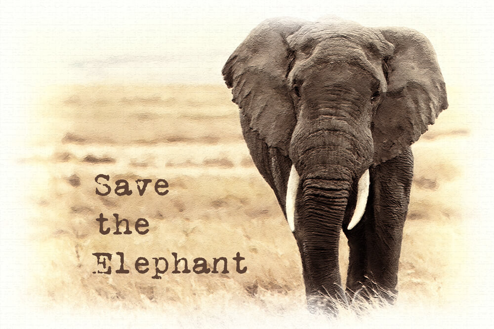 Save the Elephant Day – April 16, 2021