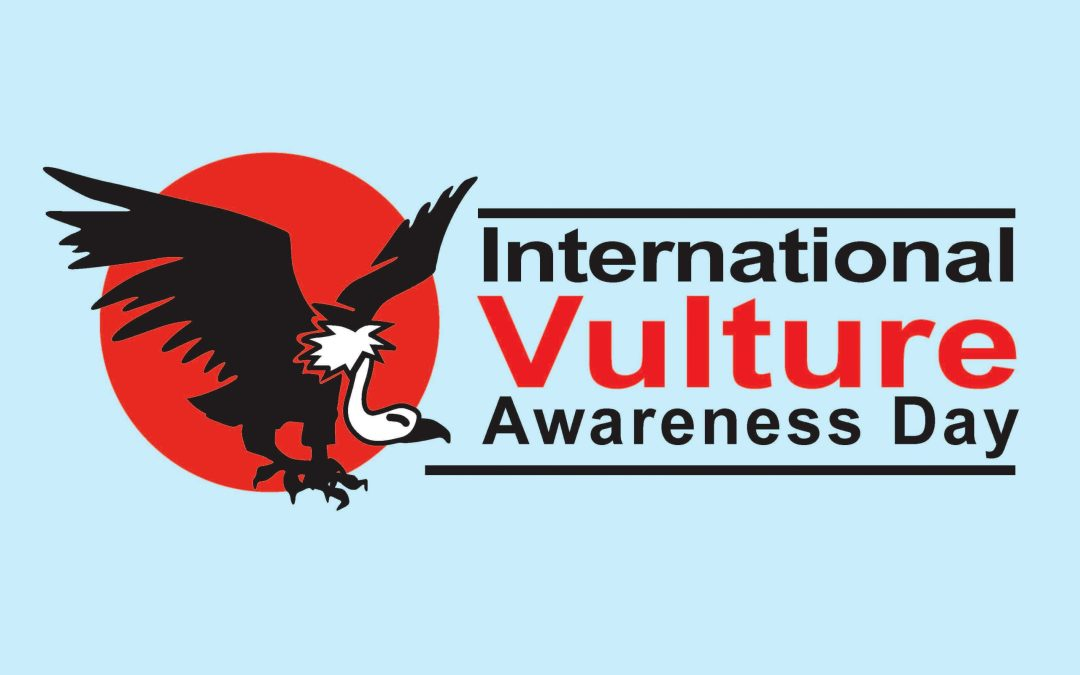 International Turkey Vulture Day