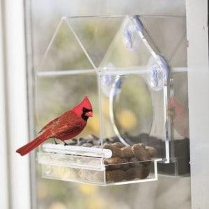nature-bird-feeder