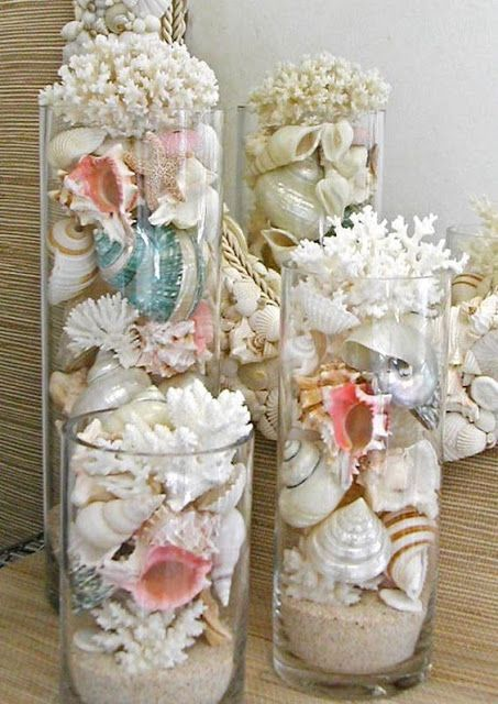sea shells in vases
