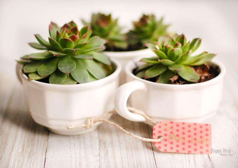 DIY Christmas Gift Succulents in Teacups