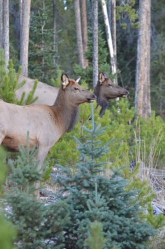 two-elk-wayne-d-lewis-dsc_1431