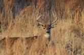 whitetail-buck-wayne-d-lewis-dsc_0195