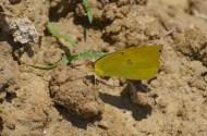 Butterfly-Wayne-D-Lewis-