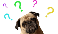 confused_dog_faq