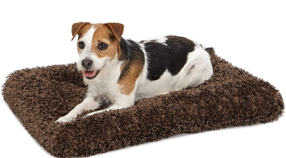 Best Affordable Dog Bed