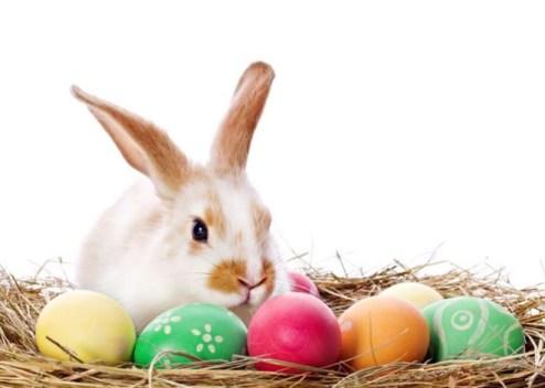 HD Easter Bunny Photos