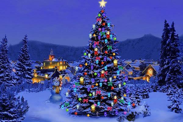 Christmas Tree Pics