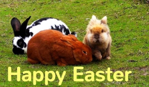Easter 2019 Bunny Images