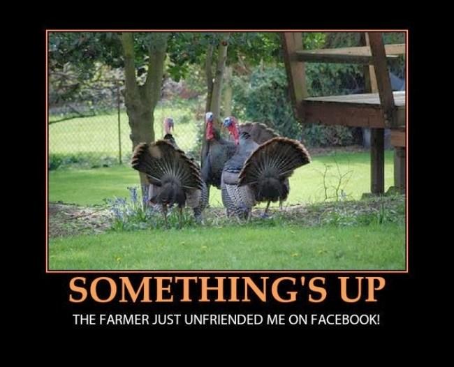 Turkey Day Meme