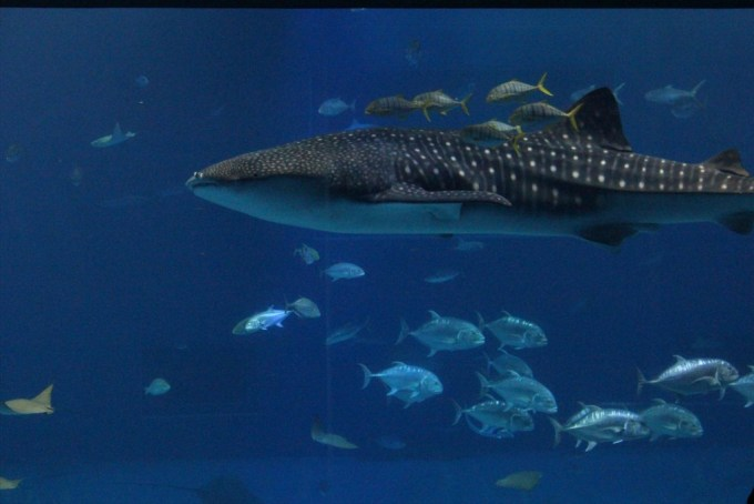 沖縄美ら海水族館の割引券購入方法