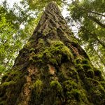 The secret power of old growth