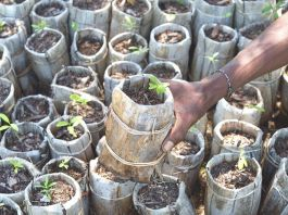 Scientists address myths over large-scale tree planting