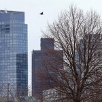 Boston moves ahead with 'urban forest' plan