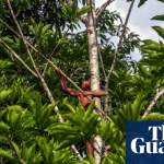 Indigenous peoples by far the best guardians of forests – UN report