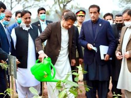 PM Imran Khan shares before and after pictures of 'Miyawaki' urban forest