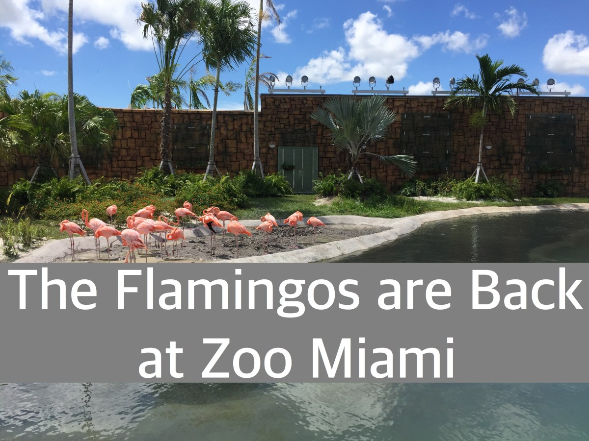 The Flamingos are Back at Zoo Miami