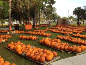 Our favorite pumpkin patches in south florida