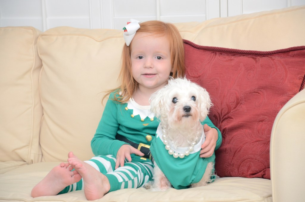 5 Ways to Savor Holidays with your dog, food safety for dogs, holiday safety tips for dogs, enjoy the holidays with pets