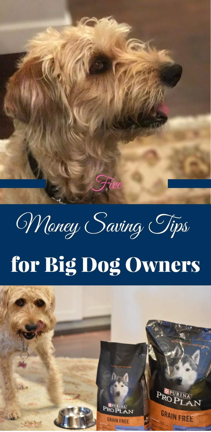 money saving tips for dogs