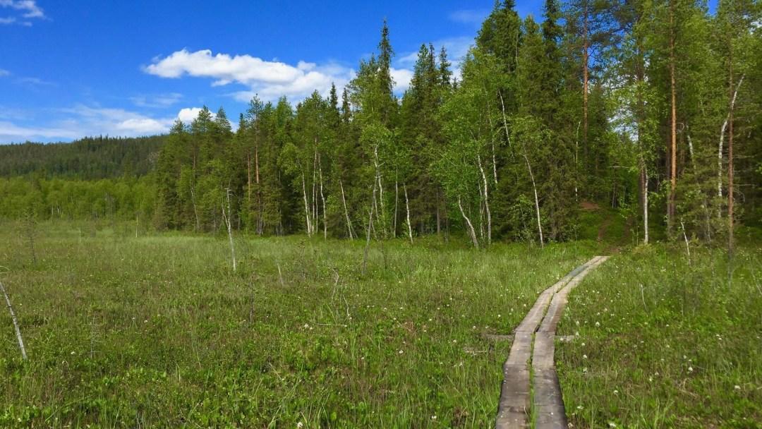 Happy-Fox-Arctic-Nature-Trip-fox-forest-p