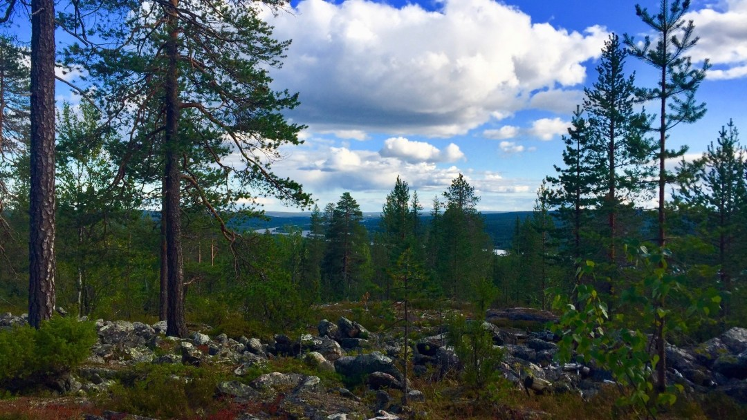 Happy-Fox-Goods-of-the-forest-ounasjoki-p