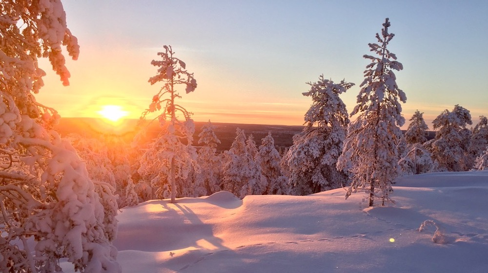 Happy-Fox-Magic-of-the-Forest-and-log-sauna-winter-snow-forest-sunset